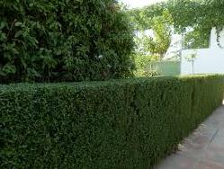 Fumigaex s l mantenimiento de parques y jardines - Mantenimiento parques y jardines ...